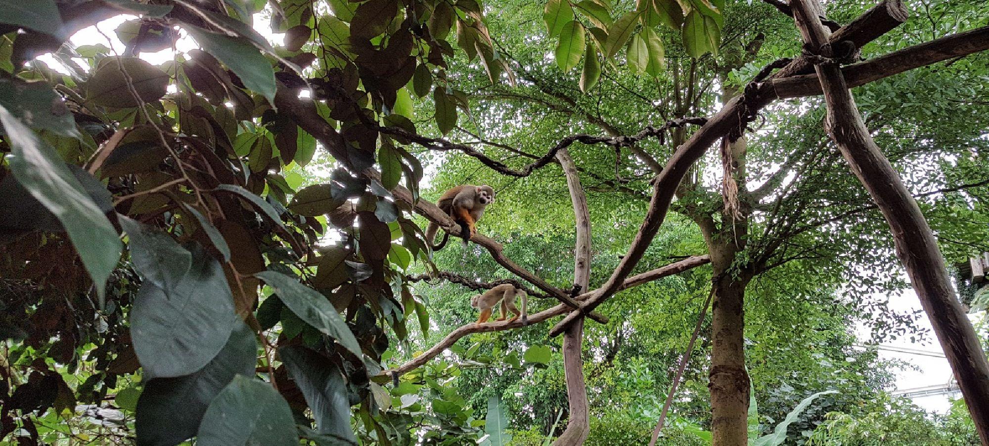 Äffchen in den Bäumen