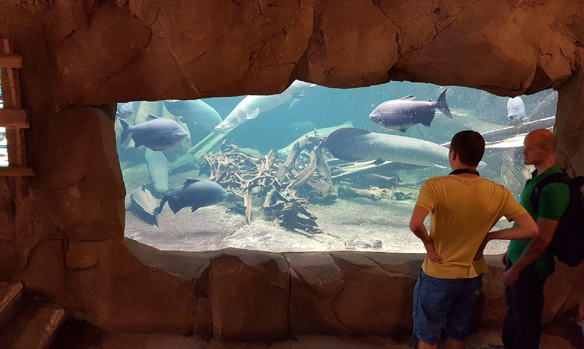 Aquarium mit großen Fischen