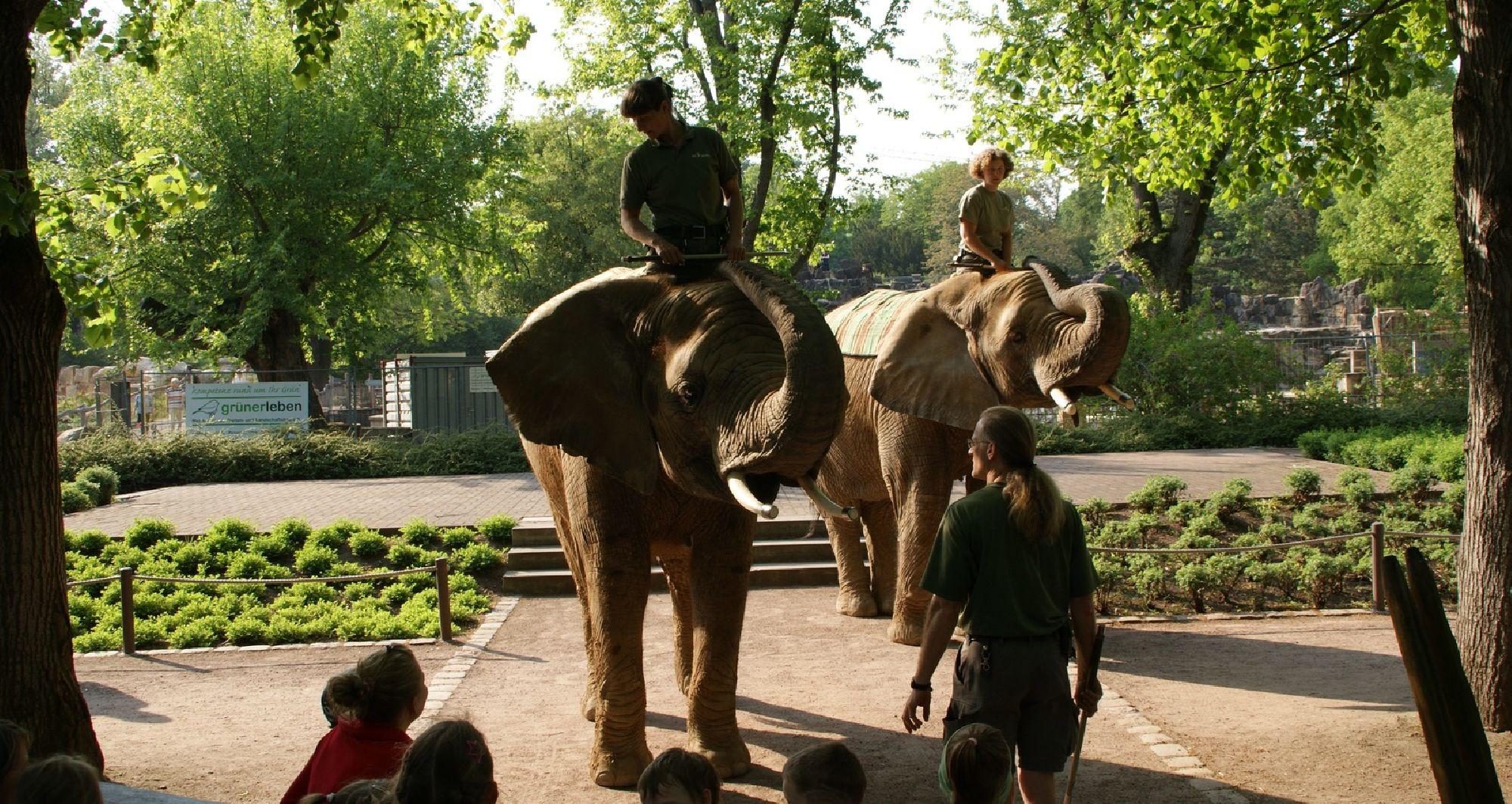 Vorführung mit den Elefanten