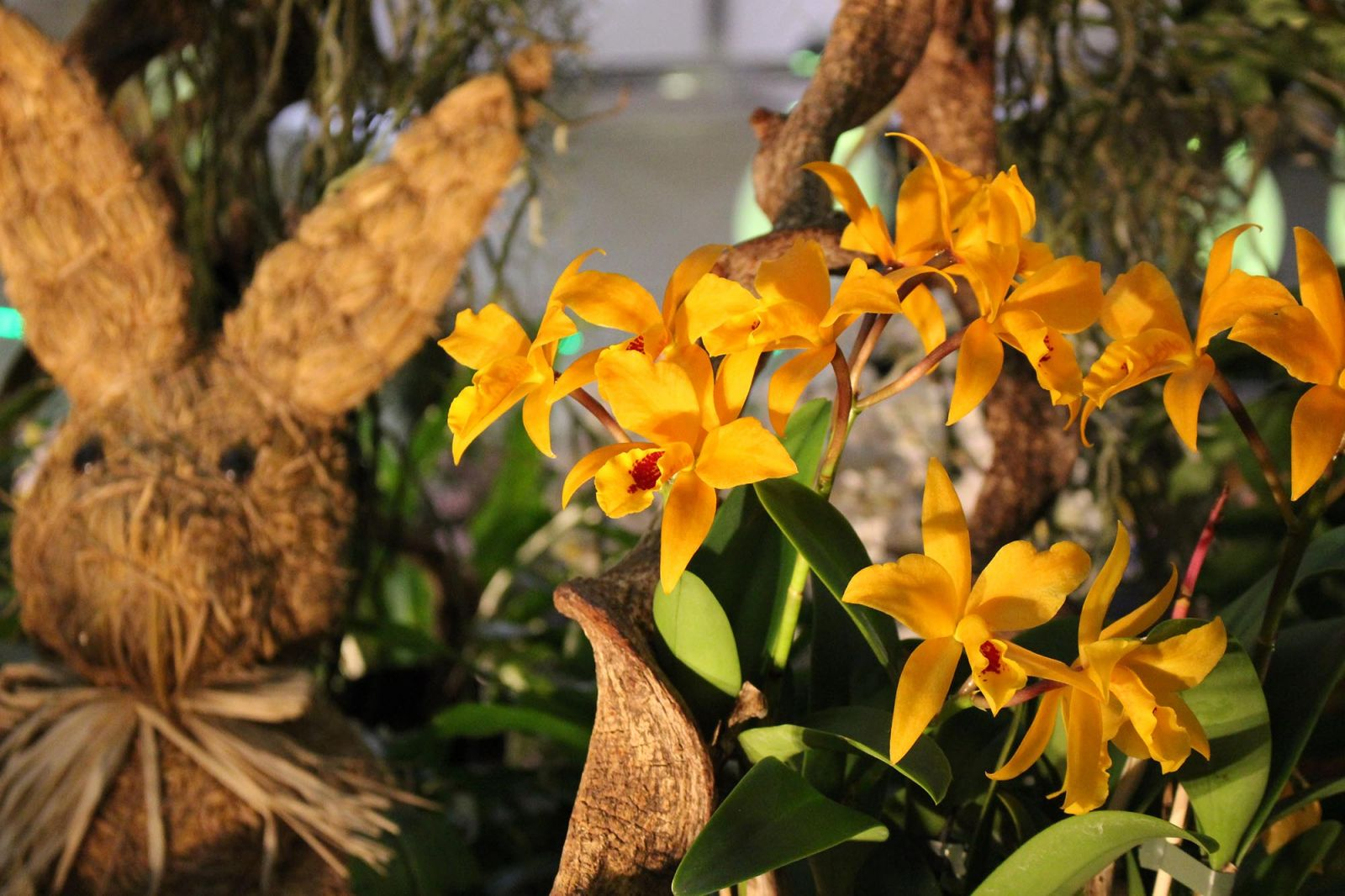 Messe Dresden Internationale Orchideen-Welt